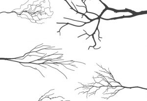 Tree Branches Vector Silhouette Clip Art Set